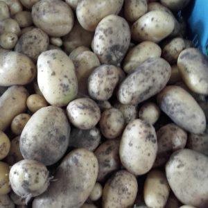 Aardappels en uien